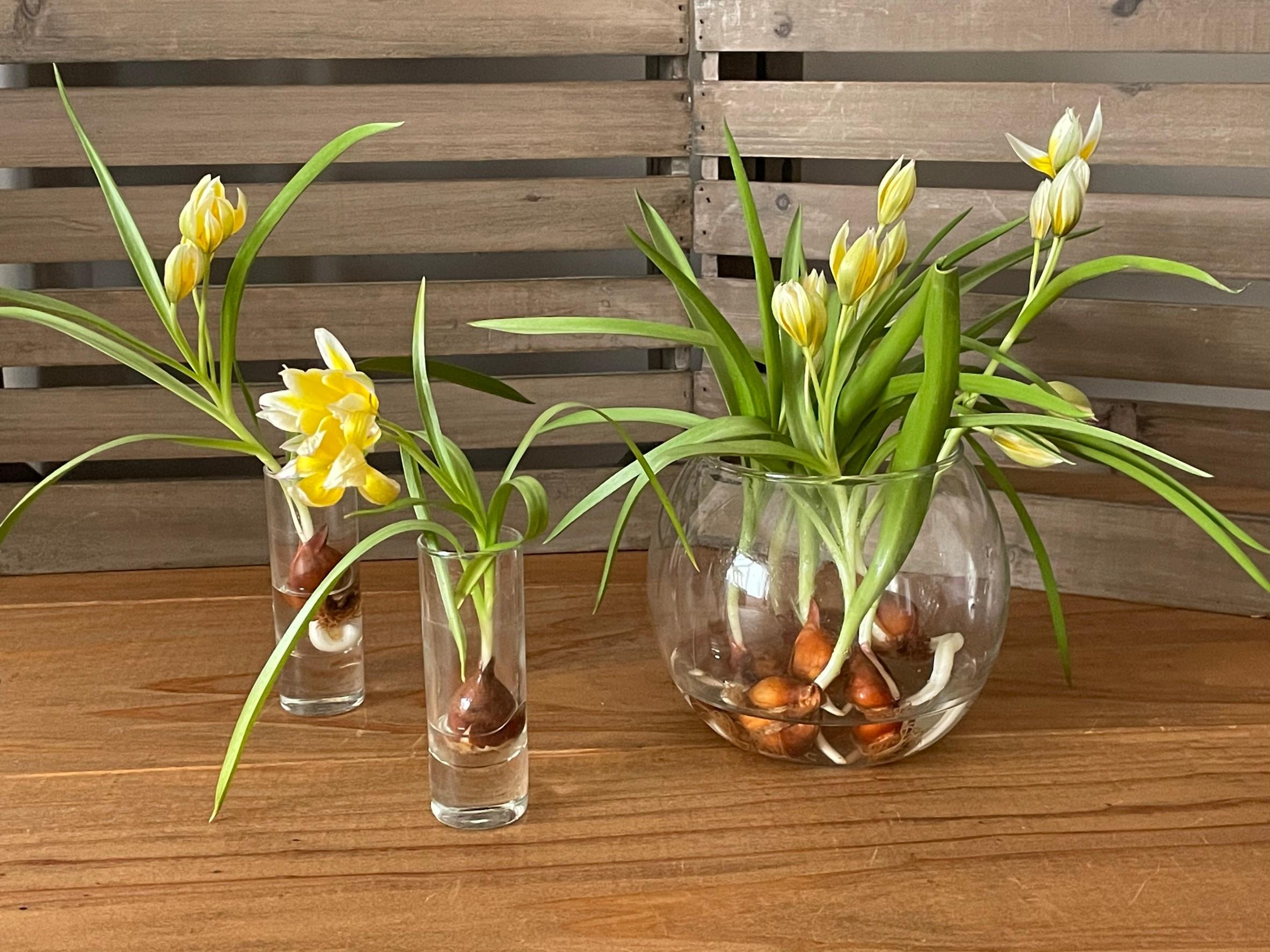 Glass Flower vase デイリーに使えるフラワーベース